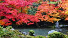 蓮華寺の極上の秋の彩り
