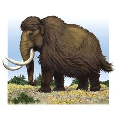 Another Wooly Mammoth