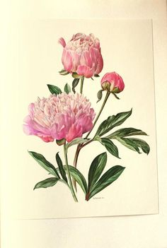 ● 1972 Vintage peony poster in delicate shades of pink. my favorite flowers ! This pink peony print comes from an out-of-print French Swiss Art Floral, Floral Prints, Illustration Botanique, Garden Illustration, Decoupage, Pink Peonies, Pink Flowers, Flower Tattoos, Key Tattoos