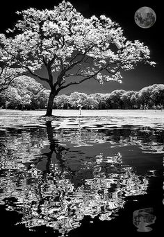 Absolutely beautiful black and white photo of tree and moon reflection. Absolutely beautiful black and white photo of tree and moon reflection. Purple Love, All Things Purple, Shades Of Purple, Purple Stuff, Purple Rain, Landscape Photography, Art Photography, Female Photography, Infrared Photography