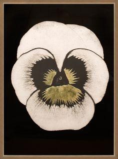Modern Pansies 1 | Natural Curiosities