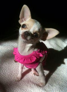 My little love!!! -Chloe