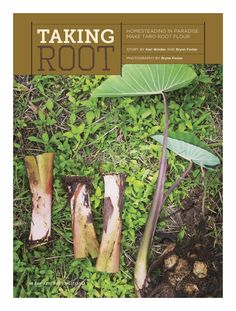 how to make taro root powder