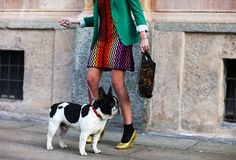 fashion doggy.
