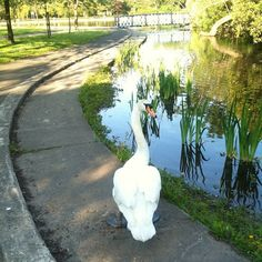 swanning about Victoria Park by @tonygallacher