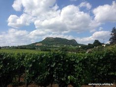Merida, Hungary, Vineyard, Mountains, Landscape, Nature, Travel, Outdoor, Outdoors