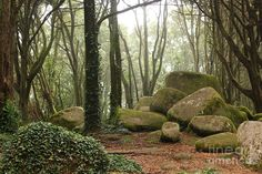 Green Forest Trees With Huge Rocks Photograph