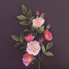 Alberta - wild rose (Rosa acicularis)