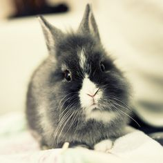 adorable #bunny
