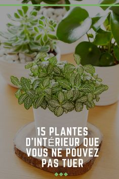 If you like plants, but you do not have the thumb . Si vous aimez les plantes, mais que vous n& malheureusement pas le pouce… If you like plants, but you do not have a green thumb, here are 15 indoor plants that are perfect for you. Planting Succulents, Potted Plants, Planting Flowers, Flower Pot Design, Garden Online, Decoration Plante, Best Indoor Plants, Spider Plants, Interior Plants