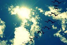 Há mais mistérios entre o Céu e a Terra do que sonha a nossa vã filosofia!