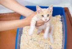 Solving The Problem Of Cat Peeing Outside The Litter Box