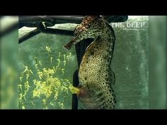 Watch thousands of babies erupt from a male seahorse's belly | oceans | Earth Touch News