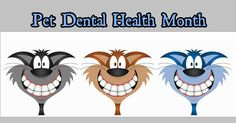 February is Pet Dental Health Month #giveyourpetareasontosmile #petdental