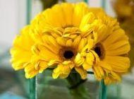 Classic Yellow Gerbera Daisy Toss Bouquet $19.95