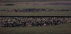 Texel- Area di svernamento per migliaia di uccelli.