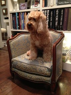 Miss Darcy's newly reupholstered Victorian Dog Bed - www.missdarcy.org