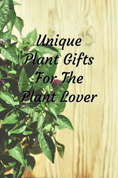 Including gift ideas for the botanist and gardener. Suggestions for house plant gifts and unique plant gifts. Easy Diy Christmas Gifts, Easy Gifts, Creative Gifts, Gift Guide For Him, Garden Birthday, Plant Cuttings, Unisex Gifts, Unique Plants, Gifts For Your Boyfriend