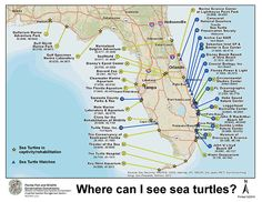 Where to view Sea Turtles?
