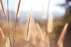 ❕ Get this free picture Desktop wallpaper flower wallpaper grass natue    📷 https://avopix.com/photo/57942-desktop-wallpaper-flower-wallpaper-grass-natue    #wheat #cereal #field #grain #agriculture #avopix #free #photos #public #domain