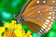 Nature Photography Butterfly Digital Print by WanderlustAndPixels
