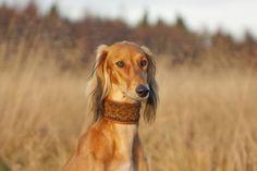 #Zaburzenia psychosomatyczne u #psa