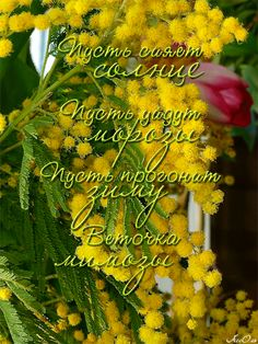 Good Morning, Positive Quotes, Happy Birthday, Herbs, Positivity, Good Things, Wallpaper, Nature, Beautiful
