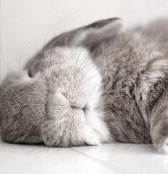 Sleeping bun ☺️