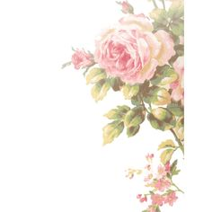 Find images and videos about flowers, drawing and roses on We Heart It - the app to get lost in what you love. Victorian Flowers, Vintage Flowers, Pink Flowers, Poster S, Flower Wallpaper, Paper Background, Vintage Prints, Scrapbook Paper, Scrapbooking