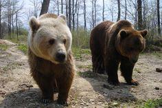 Cristi and Lydia at the World Animal Protection-funded sanctuary in Romania. Polar Bears, Teddy Bears, World Animal Protection, Family Relations, All In The Family, Cute Panda, Wild Life, Brown Bear, Panda Bear