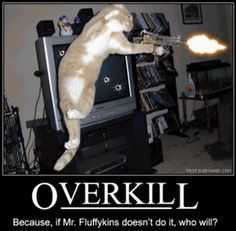 funny cats with machine guns | Nice Pics Gallery