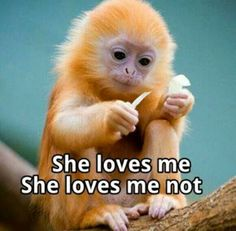 This is a cute monkey