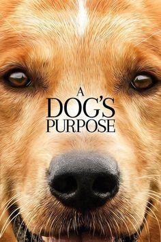 A Dog's Purpose #filmi