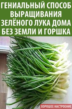 Cooking Recipes, Healthy Recipes, Haircuts For Men, Hydroponics, Garden Projects, Green Beans, Life Hacks, Food And Drink, Soda