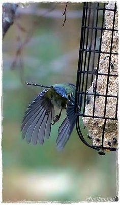 Suvikumpu Bird Feeders, Birds, Outdoor Decor, Animals, Home Decor, Animales, Decoration Home, Animaux, Room Decor