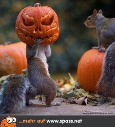 Auch Eichhörnchen feiern Halloween