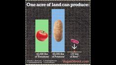 Vegan diet Food Ethics, Diet, Vegan, Vegans, Banting, Diets, Per Diem, Food