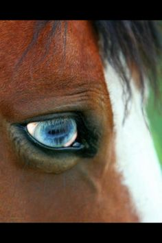 Beautiful eyes :)
