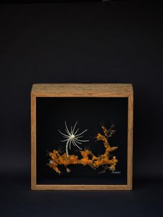 Wunderkammer art by Rudolph. Dimensions: cm in) Material: Wood overgrown with lichen, animal bones Frame box: waxed ancient oak wood, non-reflecting glass, paper Animal Bones, Contemporary Art, Wax, Paper, Frame, Glass, Animals, Botany, Art