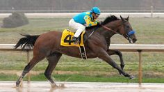 winners circle for american pharoah   031715-horses-American-Pharoah-pi-mp.vresize.1200.675.high.5.jpg