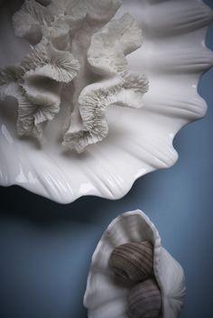 #lunac #porcelain #ocean #shells #coral #delmar Shells, Porcelain, Coral, Sea, Beauty, Inspiration, Del Mar, Seashells, Porcelain Ceramics