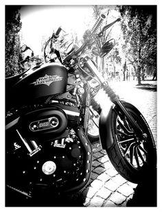Harley Davidson, Oslo by glynneh, via Flickr