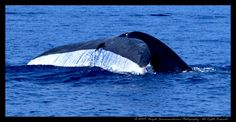 """Blue Whale 