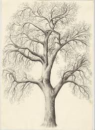 Pencil Sketch of old big tree