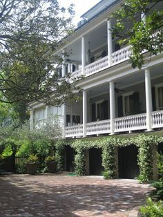 The scent of Confederate jasmine (Trachelospermum jasminoides) is inescapable in Charleston during the Spring. Its vines flow over walls and around front doors.
