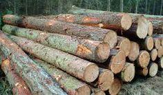 Kiln Dried Firewood Logs - http://www.buyfirewooddirect.co.uk/2-m-crate-of-kiln-dried-ash-hardwood-firewood-logs.html