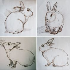 Paintings by Kim Ratigan: May 2010 – Hase Bunny Sketches, Animal Sketches, Art Drawings Sketches, Animal Drawings, Cute Drawings, Rabbit Drawing, Rabbit Art, Bunny Art, Art Graphique