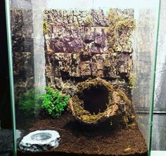Good looking tarantula enclosure