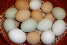 Very cool-- Lots of Interesting Facts About Eggs