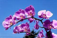 Bekämpfung von Wollläusen auf Orchideen: Alte Hausmittel als natürlicher Pflanzenschutz